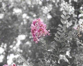 Black n Color pink flower