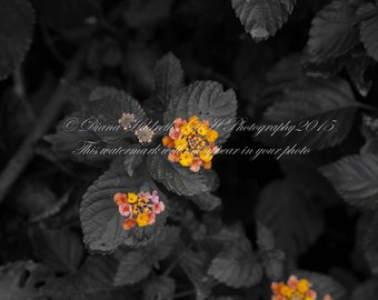 Color flowers in a black n white photo