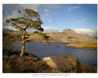 Scots Pine, Slioch and Loch Maree, Scottish Highlands