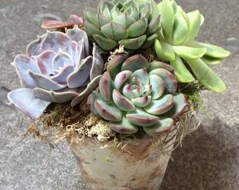 Succulent Arrangement in Marbleized Glass Vase