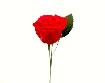 Message Rose - A Single Preserved Rose with Your Message on the Leaf