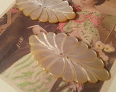 TWO Vintage Carved Mother of Pearl Buttons Stunning Large Oval MOP