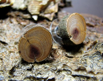 Exquisite Cedar Aged Twig Wooden Stud Earrings by Tanja Sova