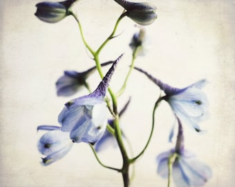 Botanical photography print blue garden flower wall art - Pale Delphiniums