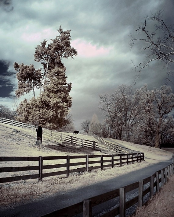 Tree photograph, stormy fence moody surreal art print walkway infrared - 8x10 - Fences