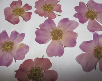 Dried Natural Pressed Flowers for Crafting - Real Wild Pink Roses