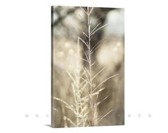 Canvas Photo, Fine Art Photography Giclee, Wild Grass, Abstract Nature, Golden Art, Elegant Art, Vertical Print, Winter Frost, Arivaca
