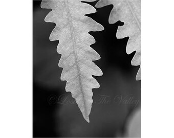 Nature Photography / Rustic Decor / Fine Art Photograph / Fern Photo / Monochromatic Print / Woodland Decor / Leaf Photo / Wall Art / Grey