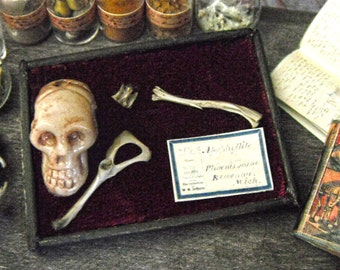 Miniature Human Bone Museum Display