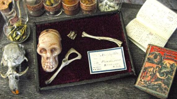 Miniature Human Bone Museum Display