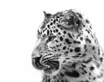 Leopard Portrait - 8x10 Black and White Animal Photo Print - Minimal Art