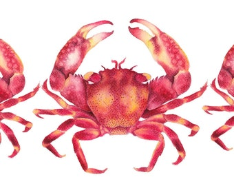 Red Crabs Limited Edition watercolour Art Print Hamptons Style Artwork  Affordable Quality Art