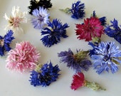 Cornflowers, Bachelor Button, Dry Flowers, Confetti, Wedding Decor, Lavender, Real, Flower Petal, Petals, Cake Topper,Table Decoration, Real