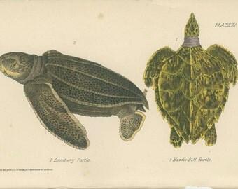 Leathery Turtle, Hawk's Bill, Antique Print, Reptile Picture 10,  Amphibian Natural History Print 1893, Library Decor, Scientific Print