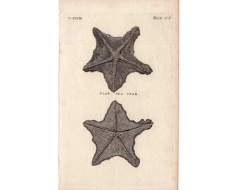 1812 STAR FISH sea life original antique engraving - flat sea star starfish