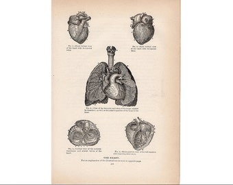 1901 HEART PRINT original antique medical human anatomy lithograph