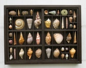 Wall art, cut seashell relief, composition within a repurposed letterpress type box.