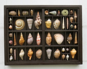 Seashell art, mixed media assemblage, seashell collection in a reclaimed wood type drawer that has been altered, refinished and framed.