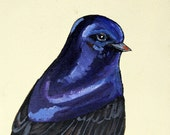 Purple Martin - painted bird portrait - original painting, acrylic and ink on gallery wrapped canvas