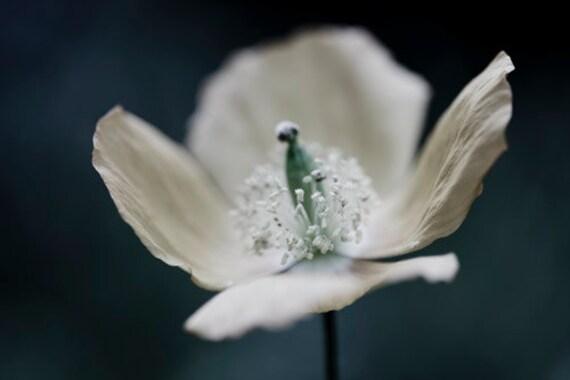 White Poppy Print, Flower Photography, White Wall Decor, Poppy Art, Dramatic, Bedroom Decor, Large Wall Art