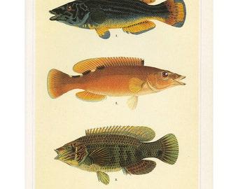 Fish Print Book Plate SALE~~Buy 3, get 1 free