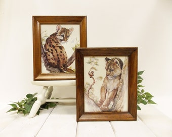 Pair of Framed Vintage Wildlife Prints-- Clancy Lithography Prints --- Dated 1978--- Cougar and Lion Cub