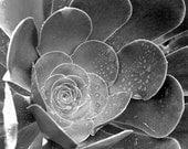 Succulent Art, Nature Wall Art,  Nature Lover, Succulent Photography, Fine Art Photography, Nature Decor, Contemporary nature