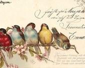 birds and flowers digital vintage antique postcard scan script printable download jpg image transfer wall art scrapbooking mixed media