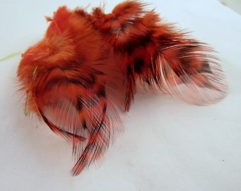 24 salmon feathers grizzly  1 to 2 inches craft feathers