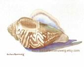 Seashell Painting, Shell Print, Conch Shell Wall Art, Seashell Watercolor, Shell Watercolor, Seashell Print, Florida Shell, Beach Home Decor