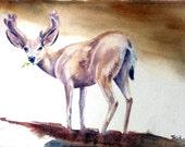 Follow Me, original watercolor, mule deer