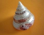 Sea Shell Carved Red Trochus Conus Shell