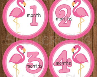 Monthly Baby Milestone Stickers Baby Girl Pink Flamingo Bird PRECUT Bodysuit Baby Stickers Monthly Baby Stickers Baby Month Sticker