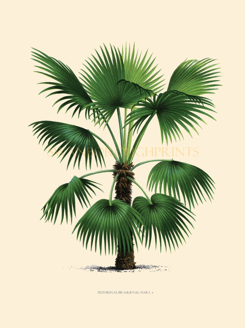 Coastal living decor tropical palm trees home decor vintage for Palm tree decorations for the home