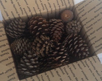 Box of pinecones.