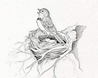 Bird sketch on nest black and white graphite blue bird sketch by Rebecca Gavney Driscoll