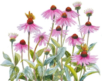 Cone Flowers and Butterfly Painting Original Watercolor Echinacea Pink Floral Wall Art 11x14 by Janet Zeh Original Art