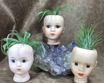 Creepy Doll Head Air Plant Vase with air plant