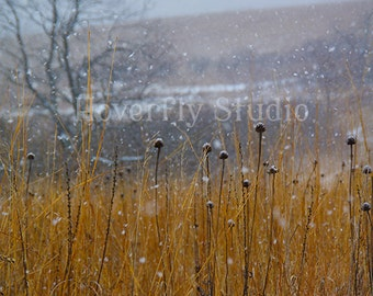 First Snow Fall on the Prairie -- 8x10 Landscape Photograph