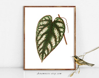 PRETTY LEAF 1 - digital image download - printable antique plant illustration retooled by Anamnesis - image transfer - totes, pillows