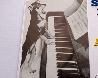 Cute musical dog happy birthday to you card