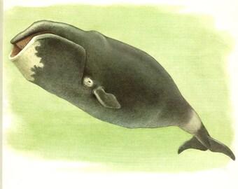 1970 VIntage Boreal Whale print vintage animal art whale poster Whale art Wildlife poster Wildlife art Bowhead whale gift  mammal poster