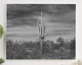 cactus canvas gallery wra...