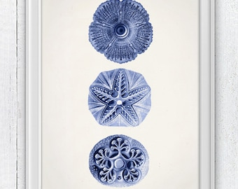 Jellyfish Cistoidea 06 in blue - Wall decor poster ,  sea life print -Marine  sea life illustration A4 print SPOJ09