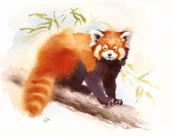 Watercolor Red Panda - Original Painting 9x12 inches Animals