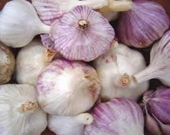 End of Year Sale Spanish Roja HARDNECK GARLIC 1lb
