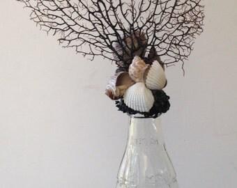 Bottle Art - Glass Coke Bottle with a Sea Fan and Seashells