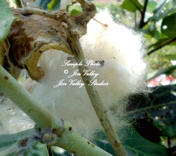 Wishing Spring | The EPA Blog