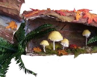 Woodland log / moss / mushroom display