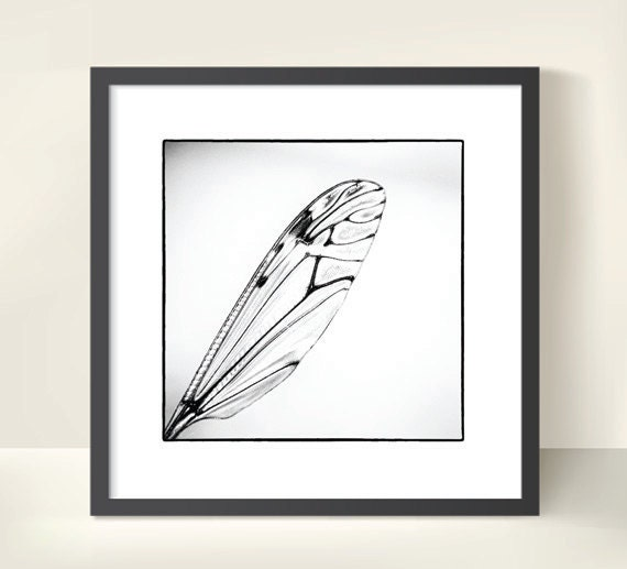 Insect Wing on White Background. Nature Photography. Black & White Print by OneFrameStories.